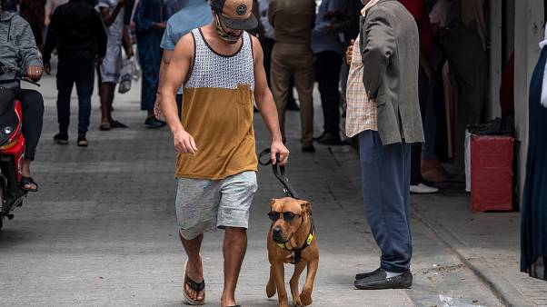 رجل يسير إلى جانب كلب في أحد شوارع المغرب
