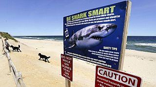 Αυστραλία: 17χρονος σέρφερ σκοτώθηκε από επίθεση καρχαρία