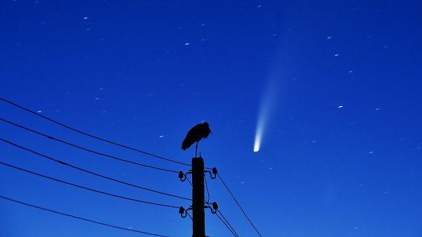 Una cicogna su una linea elettrica mentre la cometa Neowise passa nel cielo sopra Kreva, in Bielorussia