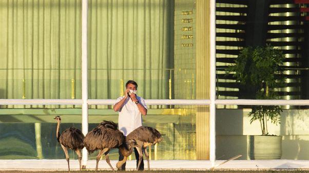 رئيس البرازيل: لم أعد احتمل روتين البقاء في المنزل وسأخضع لفحص كورونا جديد