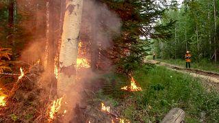 Des pompiers sur le site d'un incendie près de Iakoutsk en Russie le 15 juillet 2020