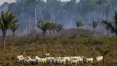 Exports to the EU could be fuelling illegal deforestation in the Amazon