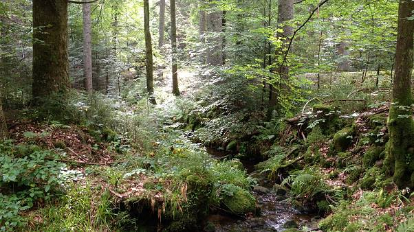 """Caccia all'uomo nella Foresta Nera: catturato il """"Rambo"""" tedesco"""