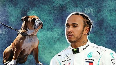 Lewis Hamilton's dog Roscoe is on an entirely vegan diet.