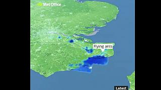 It's raining ... flying ants! UK weather radar confuses insect swarms for rain
