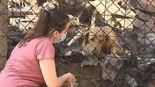 Um cão sobrevivente do incêndio é assistido através da rede do canil