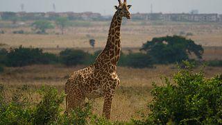 Africa's safari holidays are a popular tourist draw.