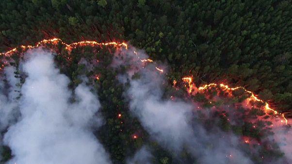 جنگل سوخته و دیاکسید کربن؛ آن چه آتشسوزی سیبری برای زمین به جا گذاشت