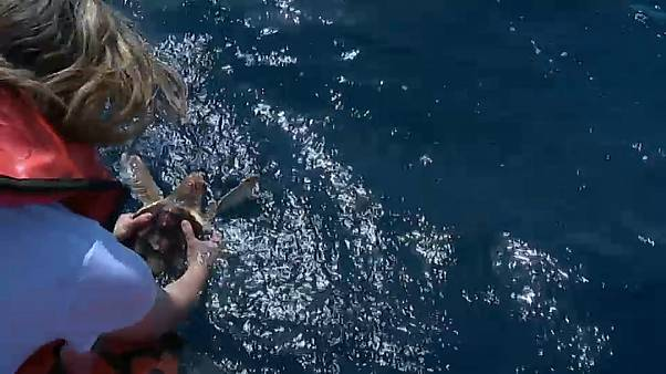 Momento da libertação das tartarugas marinhas pelo Zoomarine