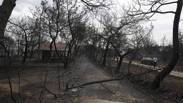 Burnt houses and trees are seen following a wildfire in Mati, east of Athens