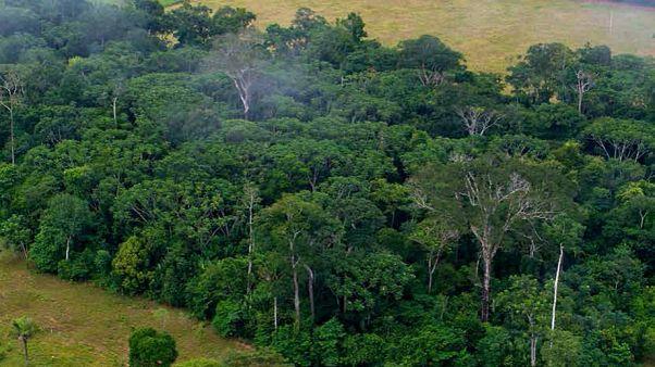 Hızla artan ormansızlaşma