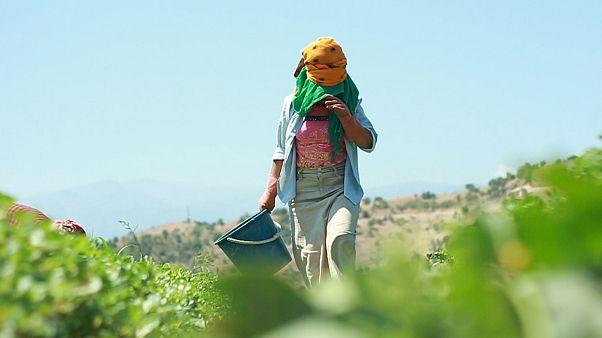 İzmir'de çalışan mevsimlik tarım işçileri