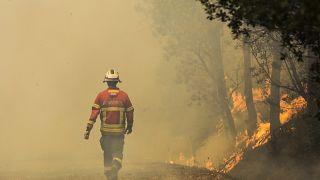 Спутники помогут Португалии бороться с лесным пожаром