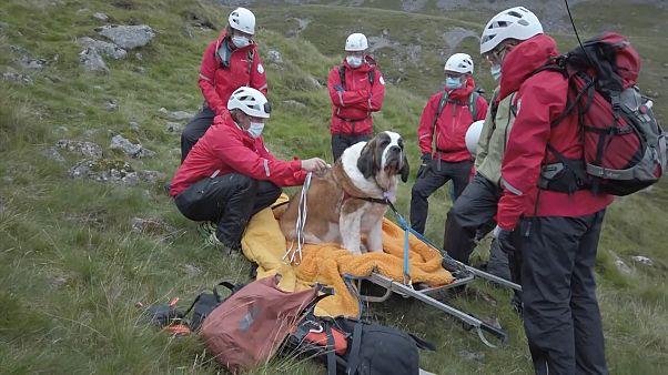 İngiltere'nin en yüksek tepesinde yorgun düşen köpek ekipler tarafından kurtarıldı