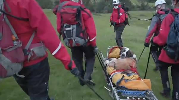 Daisy is stretchered away by a team of rescuers