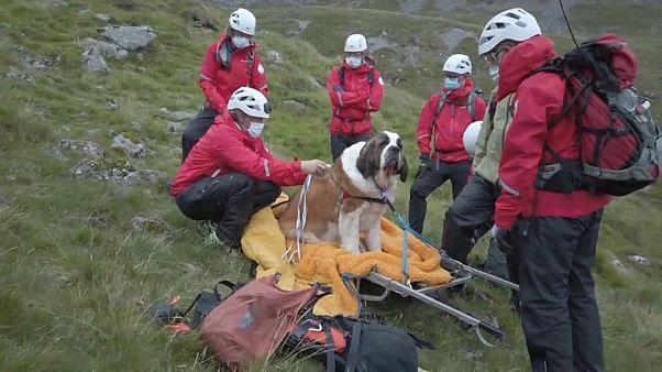 Дейзи и спасатели