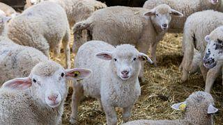 Fransa'da hayvancılık