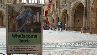 Covid-19 önlemleriyle kapatılan Londra Doğa Tarihi Müzesi yüzde 20 kapasiteyle açılıyor