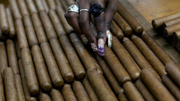 عاملة في مصنع للسيجار الكوبي