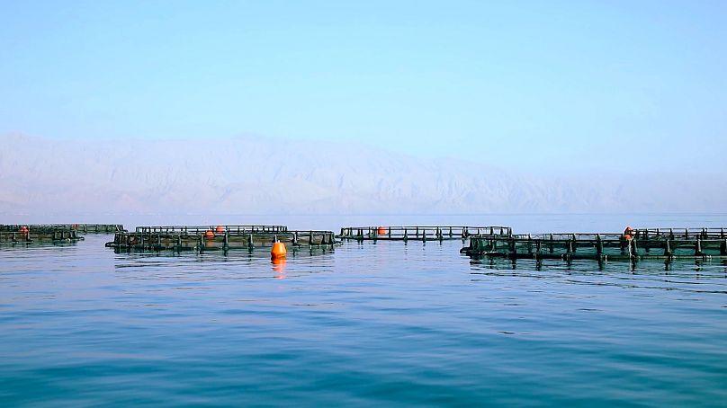A fish farm in the UAE