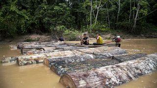 Illegális fakitermelők Peruban