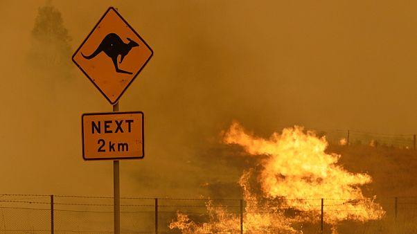 Avustralya'nın başkenti Canberra'ın güneyinde Şubat ayında bir orman yangını yaşandı