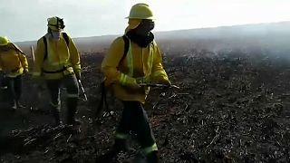 Un grupo de bomberos trata de apagar un incendio de una de las islas del Delta del Paraná