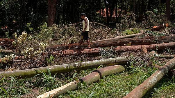 A Guarani Mbya protester walks on trees cut by a real estate developer preparing to build apartments next to his indigenous community's property in Sao Paulo, Brazil, Jan. 31
