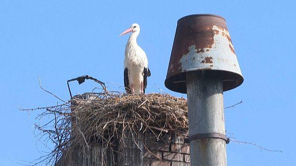 Storch in Uehlfeld
