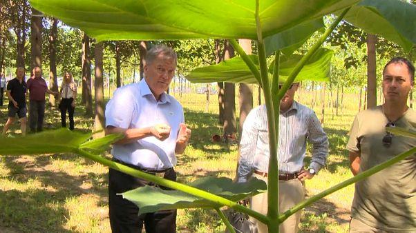 Professor József Steiner (l.) hat Smaragdbaum mit hoher Photosyntheseleistung entwicklet