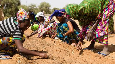 AfDB pledges $6.5bn to help Sahel countries fight desertification
