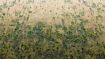 """""""The Great Green Wall promises to be a real game-changer."""""""