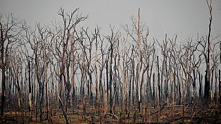 File picture: It's feared forest fires in Brazil's Amazon will be as bad as last year.