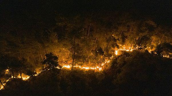 İzmir'in Menderes ilçesinde çıkan orman yangınına müdahale ediliyor