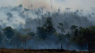 Fires devastated the Amazon rainforest in 2019