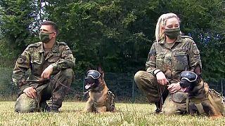 I cani addestrati per identificare il coronavirus