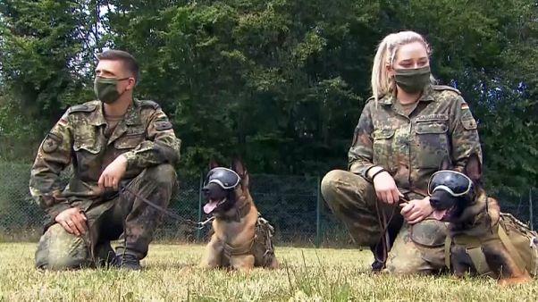 Γερμανία: Σκύλοι μυρίζουν και αναγνωρίζουν τον COVID-19