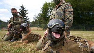 Los perros de servicio de las Fuerzas Armadas Alemanas