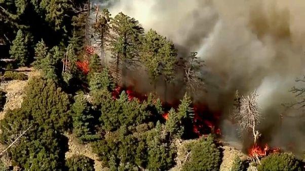 Califórnia: 2600 casas evacuadas por causa de um violento incêndio