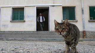 Cezaevinde bir kedi