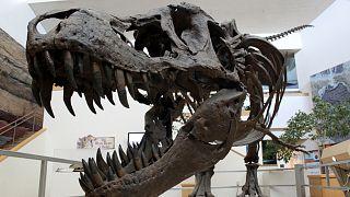اكتشاف أول حالة إصابة بالسرطان لدى ديناصور