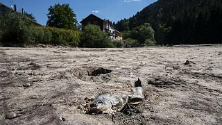 A picture taken on July 31, 2020 in Maisons-du-Bois-Lievremont, eastern France, shows a dead fish in the dry Doubs river as a heat wave hits France.