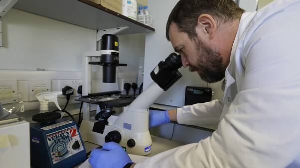 A research technician counts cells in the laboratory at Imperial College in London