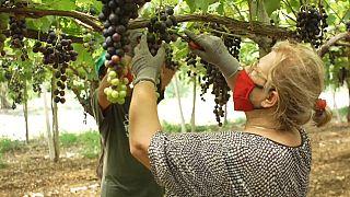 Un proyecto para proteger a los agricultores italianos