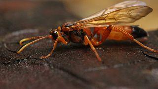 Almanya'da Berlin hükümeti böceklerin korunması için bir dizi kanunu taslağını kabul etme aşamasında.