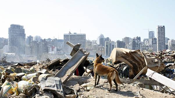 A dog of the French rescue team searches for survivors at the scene of this week's massive explosion in the port of Beirut