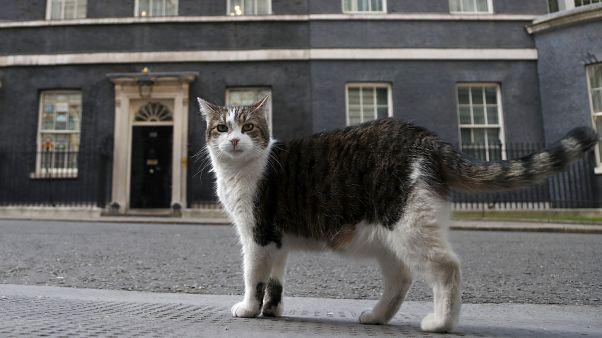 Larry, a londoni Downing Street közkedvelt cicája