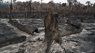 Trees are destroyed after a fire in the Alvorada da Amazonia region in Novo Progresso, Para state, Brazil, Sunday, Aug. 25, 2019.