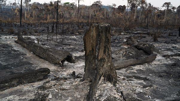 Trees are destroyed after a fire in the Alvorada da Amazonia region in Novo Progresso, Para state, Brazil, Sunday, Aug. 25, 2019.