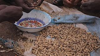 Sudan stuns traders by announcing sudden ban on exporting peanuts